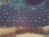 "One Year Tilia Stem ""Cs"" (400x) -e"