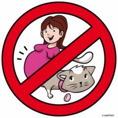 pregnant + cat => Risk Toxoplasmosis