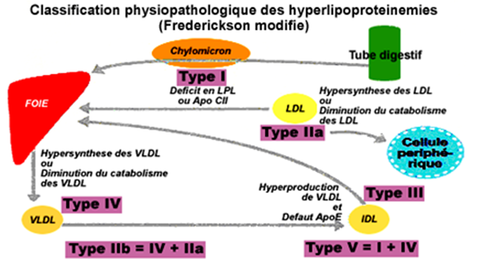 Hyperlipoprotéinémies