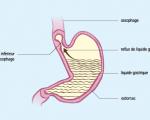 Affections gastrique, de l'estomac et du duodénum