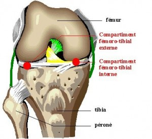 Knee pain medical daily news health news knee anatomy ccuart Choice Image