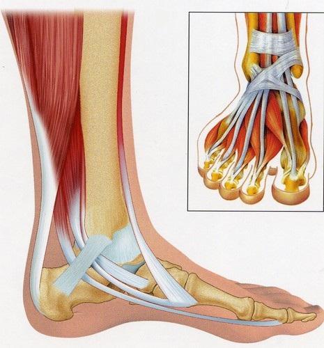 douleur dessus pied gauche