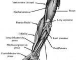 Douleur du bras