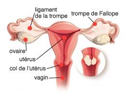 traitement mycose génitale femme