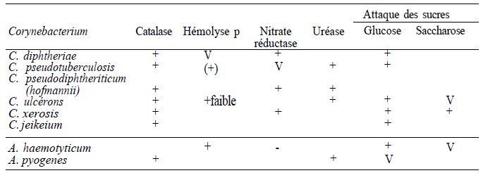 TABLEAU 1 : caractères différentiels des principales espèces de Corynebactéries