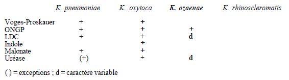 TABLEAU II : principaux caractères permettant le diagnostic des espèces du genre Klebsiella