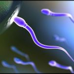 Anti-Sperm Antibodies