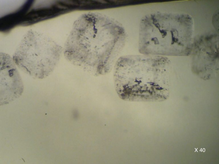 Salt crystals