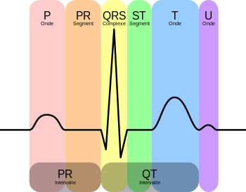 Main Electrocardiographic Anomalies