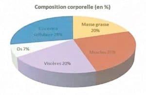 Composition corporelle en pourcentage