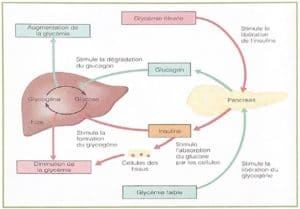 Glucides, (oses) - 1