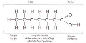 Lipid 1