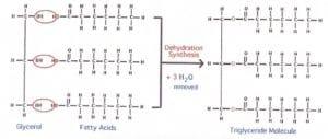 Lipid 2