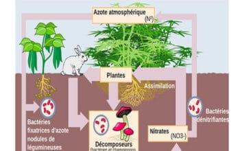 Pollution comme source de surtutilisation des nutriments