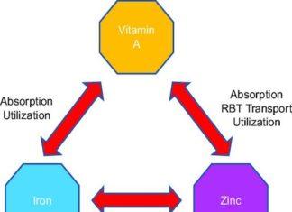 Ramifications de l'effet de synergie négative
